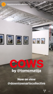 COWS 4 by Matija Tomc